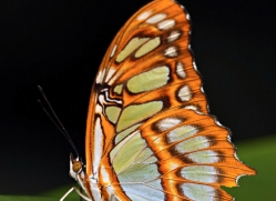 butterfly-costa-rica-5156-copyright-photographers-on-safari-com