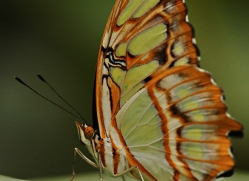 butterfly-costa-rica-5162-copyright-photographers-on-safari-com