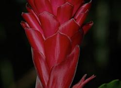 flower-costa-rica-5169-copyright-photographers-on-safari-com