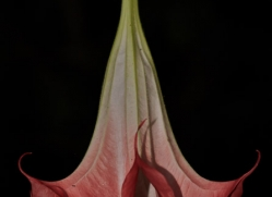 flower-costa-rica-5170-copyright-photographers-on-safari-com