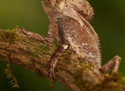 green-iguana-copyright-photographers-on-safari-com-8022