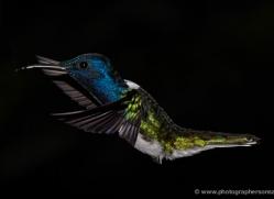 hummingbird-5131-copyright-photographers-on-safari-com