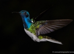 hummingbird-5132-copyright-photographers-on-safari-com