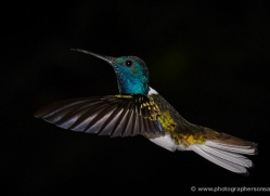 hummingbird-5133-copyright-photographers-on-safari-com