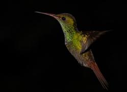 hummingbird-5134-copyright-photographers-on-safari-com