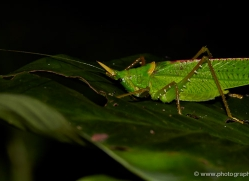 insect-costa-rica-5171-copyright-photographers-on-safari-com