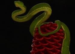 parrot-snake-copyright-photographers-on-safari-com-8052