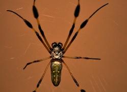 spider-costa-rica-5199-copyright-photographers-on-safari-com