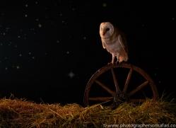 barn-owl-copyright-photographers-on-safari-com-8842