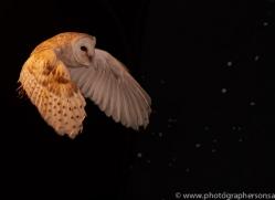 barn-owl-copyright-photographers-on-safari-com-8847