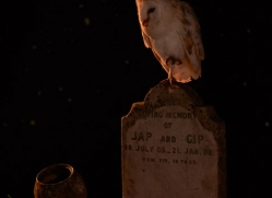 barn-owl-copyright-photographers-on-safari-com-8850
