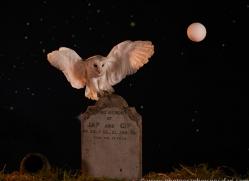 barn-owl-copyright-photographers-on-safari-com-8855