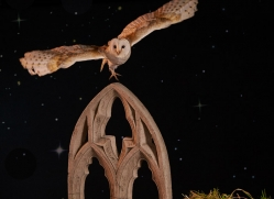 barn-owl-copyright-photographers-on-safari-com-8865