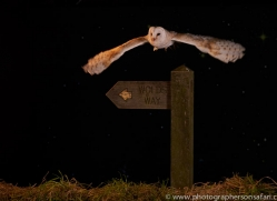 barn-owl-copyright-photographers-on-safari-com-8869