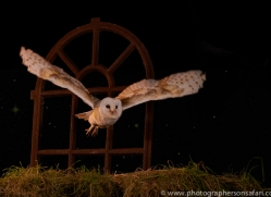 barn-owl-copyright-photographers-on-safari-com-8873