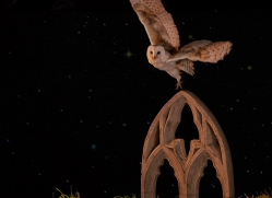 barn-owl-copyright-photographers-on-safari-com-8874