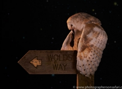 barn-owl-copyright-photographers-on-safari-com-8877