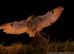 long-eared-owl-copyright-photographers-on-safari-com-8927