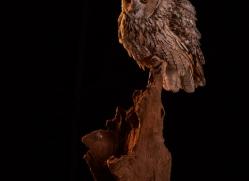 long-eared-owl-copyright-photographers-on-safari-com-8930
