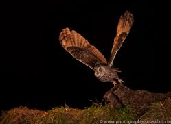 long-eared-owl-copyright-photographers-on-safari-com-8932