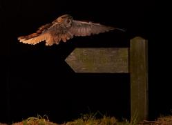 long-eared-owl-copyright-photographers-on-safari-com-8933
