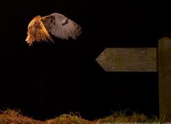 long-eared-owl-copyright-photographers-on-safari-com-8934