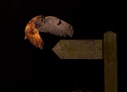long-eared-owl-copyright-photographers-on-safari-com-8936