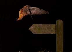 long-eared-owl-copyright-photographers-on-safari-com-8937