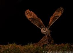 long-eared-owl-copyright-photographers-on-safari-com-8939