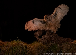long-eared-owl-copyright-photographers-on-safari-com-8942
