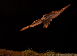 long-eared-owl-copyright-photographers-on-safari-com-8947