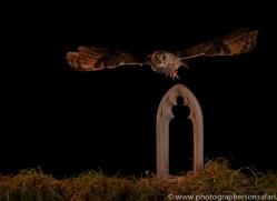 long-eared-owl-copyright-photographers-on-safari-com-8948