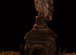 scopps-owl-copyright-photographers-on-safari-com-8955