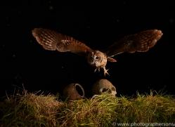tawny-owl-copyright-photographers-on-safari-com-8959