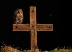 tawny-owl-copyright-photographers-on-safari-com-8960