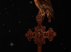 tawny-owl-copyright-photographers-on-safari-com-8961