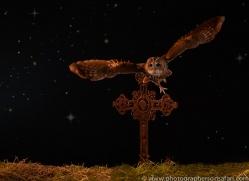 tawny-owl-copyright-photographers-on-safari-com-8962