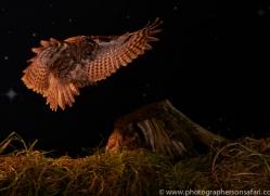 tawny-owl-copyright-photographers-on-safari-com-8966