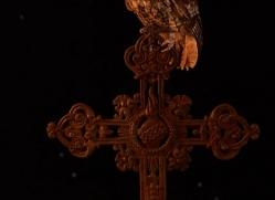 tawny-owl-copyright-photographers-on-safari-com-8967