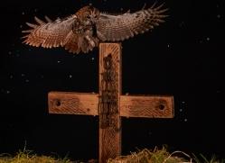 tawny-owl-copyright-photographers-on-safari-com-8969