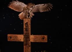 tawny-owl-copyright-photographers-on-safari-com-8970