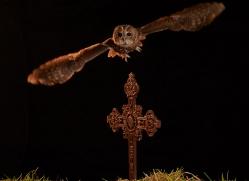 tawny-owl-copyright-photographers-on-safari-com-8971