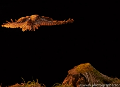 tawny-owl-copyright-photographers-on-safari-com-8976