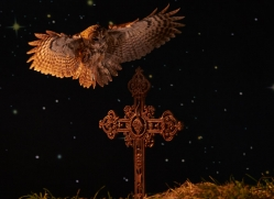 tawny-owl-copyright-photographers-on-safari-com-8980