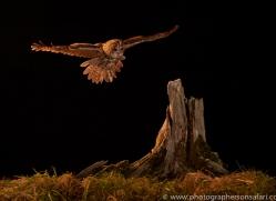 tawny-owl-copyright-photographers-on-safari-com-8982