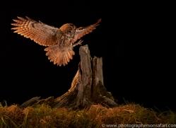 tawny-owl-copyright-photographers-on-safari-com-8983