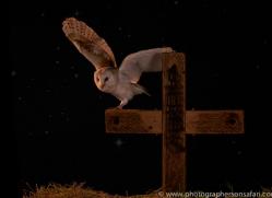 barn-owl-copyright-photographers-on-safari-com-8840