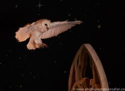 barn-owl-copyright-photographers-on-safari-com-8848