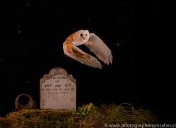 barn-owl-copyright-photographers-on-safari-com-8853