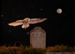 barn-owl-copyright-photographers-on-safari-com-8854
